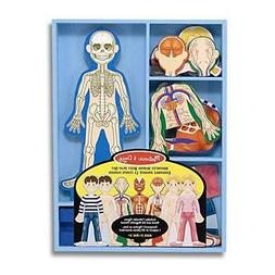 Magnetic Human Body Anatomy Play Set With 24 Magnetic Pieces